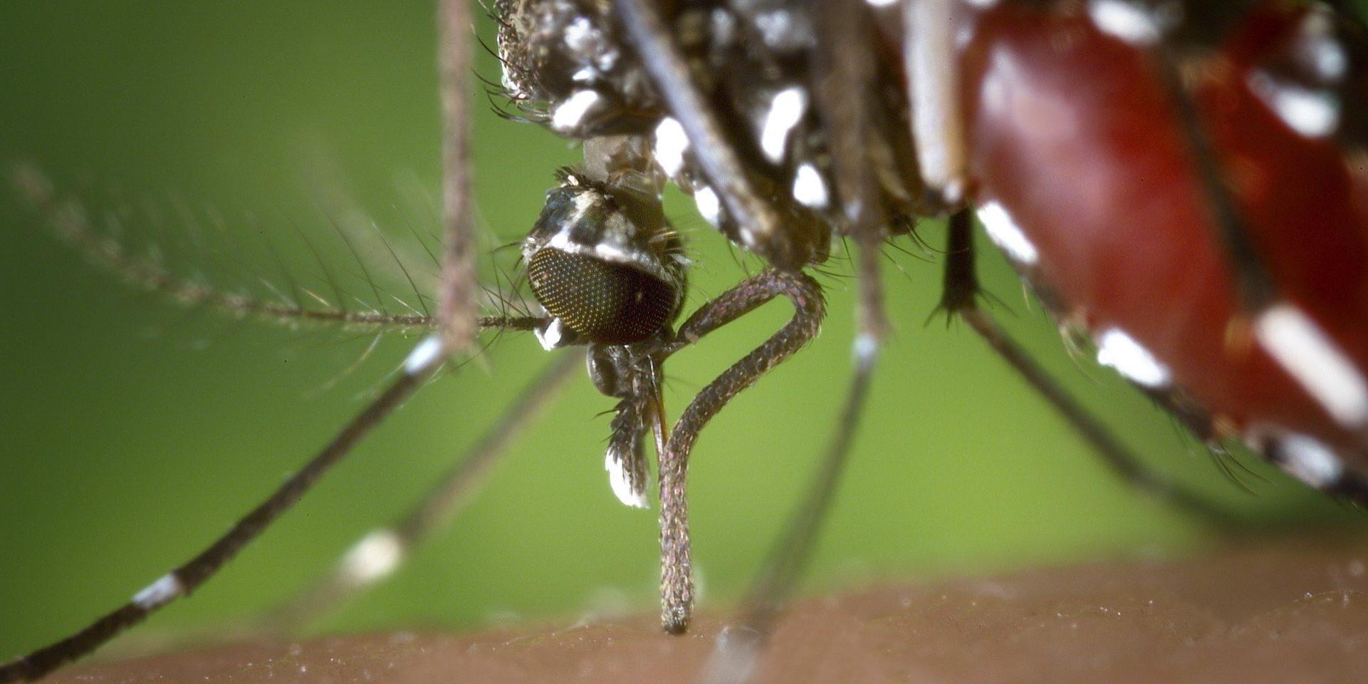 mosquito-ios-dutikou-neilou